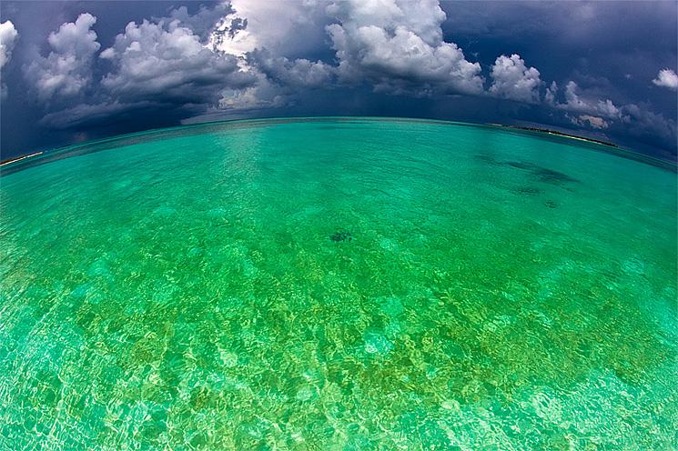 Stingray Bahamas